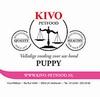 Kivo Puppy compleet 20 x 500 gram
